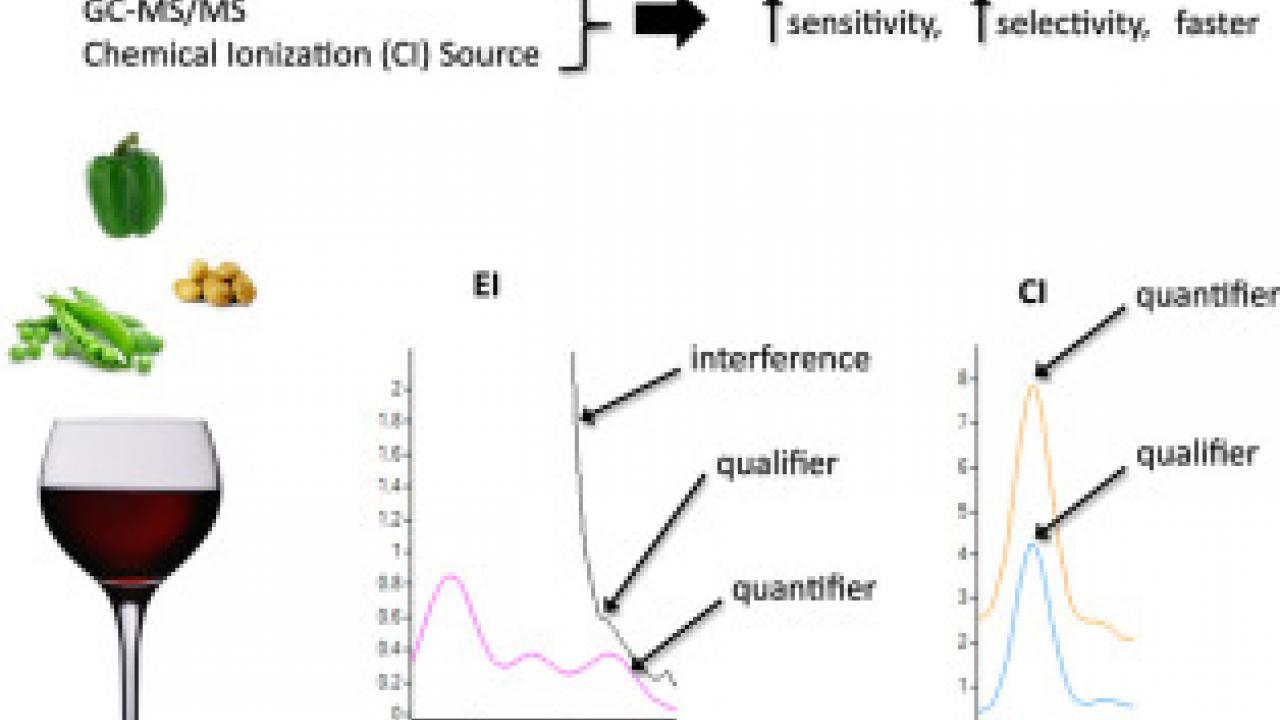 Hot off the press: A comparison of sorptive extraction techniques coupled to a new quantitative, sensitive, high throughput GC–MS/MS method for methoxypyrazine analysis in wine
